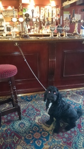 Ollie in dog friendly pub in Surrey